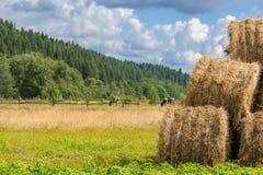 Ρόλοι σανού που συσσωρεύονται σε ένα αγρόκτημα δίπλα στο λιβάδι αγελάδων Στοκ φωτογραφία με δικαίωμα ελεύθερης χρήσης