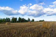 Ρόλοι του σανού στον τομέα Στοκ εικόνες με δικαίωμα ελεύθερης χρήσης