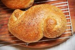 Ρόλος ψωμιού σουσαμιού που διαμορφώνεται και που ψήνεται πρόσφατα, στήριξη Στοκ Εικόνες