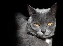 Ρύγχος μια γάτα Στοκ φωτογραφία με δικαίωμα ελεύθερης χρήσης
