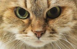 ρύγχος s γατών στοκ εικόνα