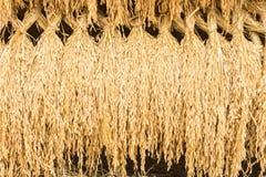 Ρύζι ακίδων Στοκ φωτογραφίες με δικαίωμα ελεύθερης χρήσης