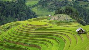 ρύζι Βιετνάμ πεδίων Στοκ Φωτογραφία