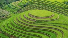 ρύζι Βιετνάμ πεδίων Στοκ Φωτογραφίες