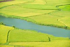 ρύζι Βιετνάμ πεδίων Στοκ φωτογραφίες με δικαίωμα ελεύθερης χρήσης