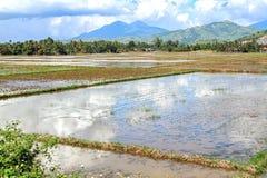 ρύζι Βιετνάμ πεδίων Στοκ εικόνες με δικαίωμα ελεύθερης χρήσης