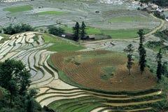 ρύζι Βιετνάμ 2 πεδίων Στοκ Εικόνες