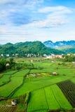 Ρύζι, Βιετνάμ Στοκ Εικόνες