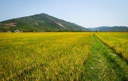ρύζι βουνών πεδίων ανασκόπη&s Στοκ εικόνα με δικαίωμα ελεύθερης χρήσης