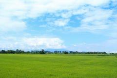 Ρύζι και ουρανός Στοκ εικόνες με δικαίωμα ελεύθερης χρήσης