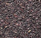 ρύζι μούρων ανασκόπησης Στοκ φωτογραφίες με δικαίωμα ελεύθερης χρήσης