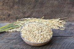 Ρύζι, ορυζώνας, ξηρό ρύζι στοκ εικόνα