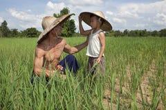 ρύζι ορυζώνα ατόμων παιδιών &Tau Στοκ Εικόνα