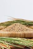 Ρύζι ορυζώνα και ξύλινες κουτάλες Στοκ Φωτογραφία