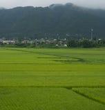 ρύζι ορυζώνων στοκ εικόνες με δικαίωμα ελεύθερης χρήσης