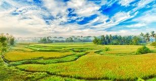 ρύζι πανοράματος ορυζώνα στοκ φωτογραφία με δικαίωμα ελεύθερης χρήσης