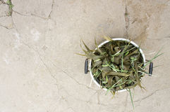 Ρύζι-πουτίγκα παραδοσιακού κινέζικου Στοκ Φωτογραφία