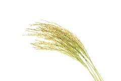 Ρύζι που απομονώνεται στο άσπρο υπόβαθρο Στοκ εικόνες με δικαίωμα ελεύθερης χρήσης