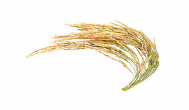 Ρύζι που απομονώνεται στο άσπρο υπόβαθρο Στοκ φωτογραφία με δικαίωμα ελεύθερης χρήσης