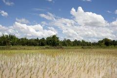 ρύζι Ταϊλάνδη πεδίων της Ασί&alph Στοκ Εικόνα