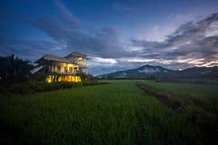ρύζι Ταϊλάνδη πεδίων Στοκ εικόνα με δικαίωμα ελεύθερης χρήσης