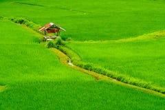 ρύζι Ταϊλάνδη πεδίων Στοκ Εικόνα