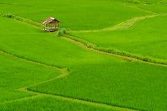 ρύζι Ταϊλάνδη πεδίων Στοκ φωτογραφία με δικαίωμα ελεύθερης χρήσης