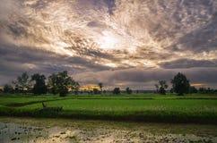 ρύζι Ταϊλάνδη αγροτών Στοκ εικόνα με δικαίωμα ελεύθερης χρήσης
