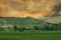 ρύζι Ταϊλάνδη πεδίων Ασία Τοπίο με το θυελλώδη ουρανό πέρα από τους τομείς ρυζιού Στοκ Εικόνες