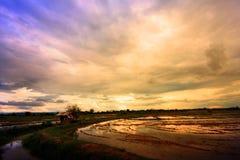 ρύζι Ταϊλανδός πεδίων Στοκ φωτογραφία με δικαίωμα ελεύθερης χρήσης