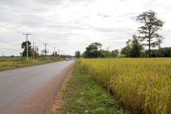 ρύζι του Λάος πεδίων στοκ εικόνα