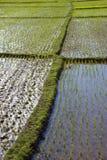 ρύζι 2 πεδίων Στοκ φωτογραφίες με δικαίωμα ελεύθερης χρήσης