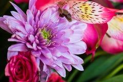 Ρύθμιση αριθμός 1 θερινών λουλουδιών Στοκ φωτογραφία με δικαίωμα ελεύθερης χρήσης