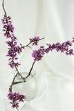 ρύθμιση Ασιάτης που βλαστάνει τους floral κλαδίσκους στοκ εικόνες με δικαίωμα ελεύθερης χρήσης