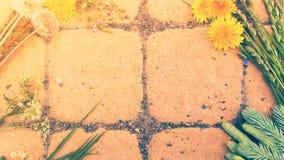 Ρύθμιση θερινών λουλουδιών Στοκ Φωτογραφίες