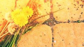 Ρύθμιση θερινών λουλουδιών Στοκ Εικόνα