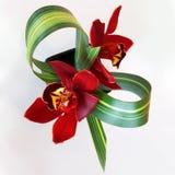 Ρύθμιση λουλουδιών άνωθεν, υψηλή άποψη γωνίας στοκ εικόνες