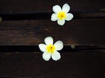 Ρύθμιση λουλουδιών, λουλούδι Plumeria στον παλαιό ξύλινο πίνακα Στοκ Φωτογραφίες