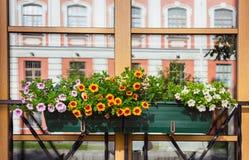 Ρύθμιση λουλουδιών κιβωτίων παραθύρων Αγία Πετρούπολη Στοκ εικόνα με δικαίωμα ελεύθερης χρήσης