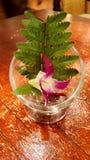 Ρύθμιση λουλουδιών ορχιδεών Στοκ φωτογραφία με δικαίωμα ελεύθερης χρήσης