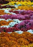 ρύθμιση λουλουδιών Στοκ Εικόνες