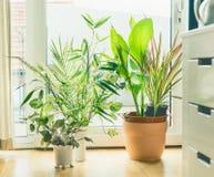 Ρύθμιση δοχείων Houseplant στο παράθυρο στο καθιστικό Αστικοί διαβίωση και προσδιορισμός Στοκ Εικόνα