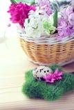 Ρύθμιση Πάσχας - αυγά ορτυκιών και λουλούδια υάκινθων Στοκ φωτογραφίες με δικαίωμα ελεύθερης χρήσης