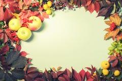 Ρύθμιση φθινοπώρου των φύλλων φθινοπώρου και των φρούτων, τοπ άποψη, Copyspace, υπόβαθρο, πλαίσιο Στοκ Εικόνες