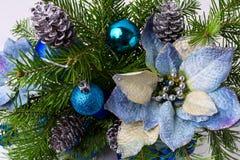 Ρύθμιση Χριστουγέννων με τους κλάδους έλατου και το μπλε poinsettia μεταξιού στοκ φωτογραφία με δικαίωμα ελεύθερης χρήσης