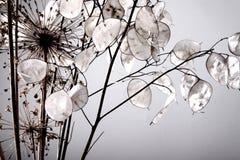 ρύθμιση floral Στοκ εικόνα με δικαίωμα ελεύθερης χρήσης