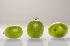Ρύθμιση τριών Kiwiberries 1 στοκ φωτογραφία