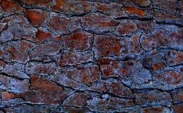 Δρύινη σύσταση δέντρων Στοκ Εικόνες