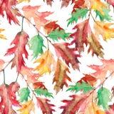 Δρύινος κλάδος, watercolor, σχέδιο άνευ ραφής Στοκ εικόνες με δικαίωμα ελεύθερης χρήσης