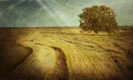 δρύινο δέντρο εικονογράφων μορφής 8 πρόσθετο eps Στοκ Φωτογραφίες